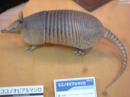 456岸和田自然資料館16.JPG